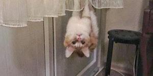 Spidercat! Spidercat!