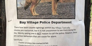 The mere sighting of a coyote is not a reason to call the Police department.