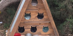 Cat hostel for feral cats in Portugal.