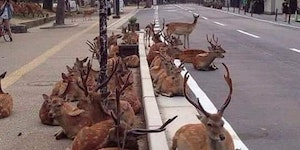 The deer will inherit the earth...