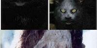 Meet demon cat