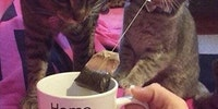 Dis is mine teabag.