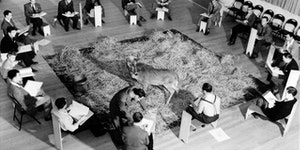 Disney artists drawing a live deer in 1942 ahead of starting animation on Bambi