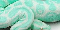 Minty Python