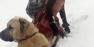Girl and her dog rescue a mother goat and her newborn baby.