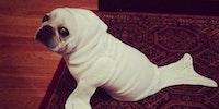 I'm a seal!