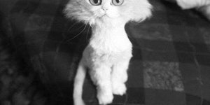 The best possible haircut for a fluffy cat