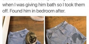 Cats work in mysterious ways.