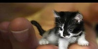 Mr. Peeples is a full grown cat.