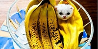 They said I could be anything. So I became a banana.