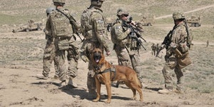 Let's remember our 4 legged veterans as well.