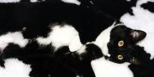 Camouflage Lvl: Cat.