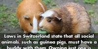Laws In Switzerland. I approve.
