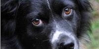 Depressed dog talks about life.