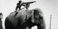 An elephant-mounted machine gun - 1914