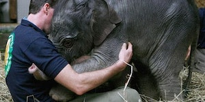 Baby elephant loves.