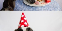 Dog's Birthday Party