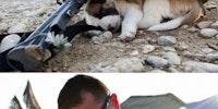 Animals in war.