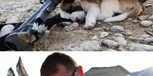 Animals in war.