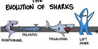 The Evolution of Sharks
