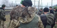 Ukrainian soldier goes home from the war zone in Eastern Ukraine with a rescued cat.