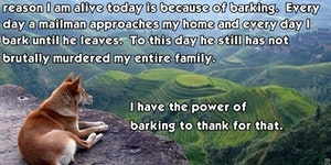 The power of barking