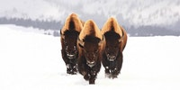 The Bison committee would like to have a word with you...