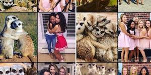 Ever notice how sorority girls pose exactly like meerkats in pictures?