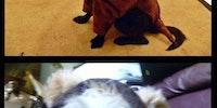 Animals dressed up as animals.