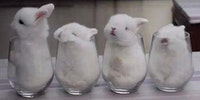 I'll take ten glasses of bunny to go pls
