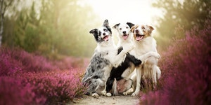 Three Cute Dogs Posing