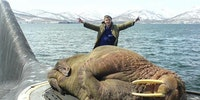 A walrus sleeping on a Russian submarine