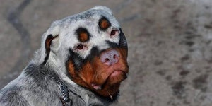 This dog looks like a juggalo