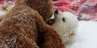 Polar bear cuddles!