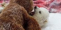 Polar bear cuddles!
