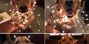 Pup getting in to the Christmas spirit