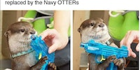 That's otter-ly insane