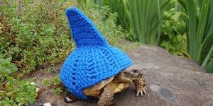 Tortoise cozies.