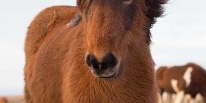 This horse has beautiful hair