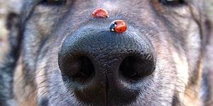 Ladybug snoot scoot.
