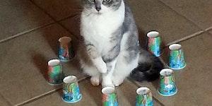 Kitty prison.