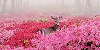 Deer heaven