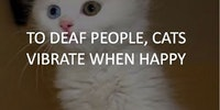Cats and deaf people.