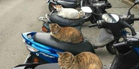Biker gang terrorises local residents