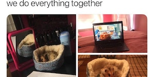 Hamster + new bed = <3
