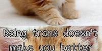 Cats teaching a thing.