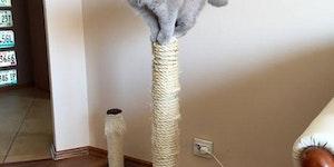 Gato post.