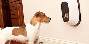 Pet-cam. I need this.