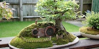 A Baggins Bonsai.