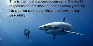 The most dangerous animal in the world.